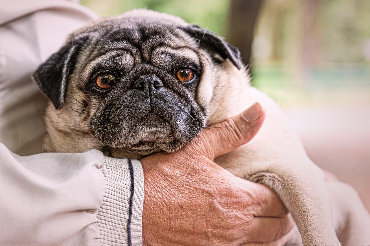 Pet-Therapy-a-Supporto-degli-Anziani-Quali-Benefici-Sulla-Salute Pet Therapy a supporto degli anziani. Quali benefici?