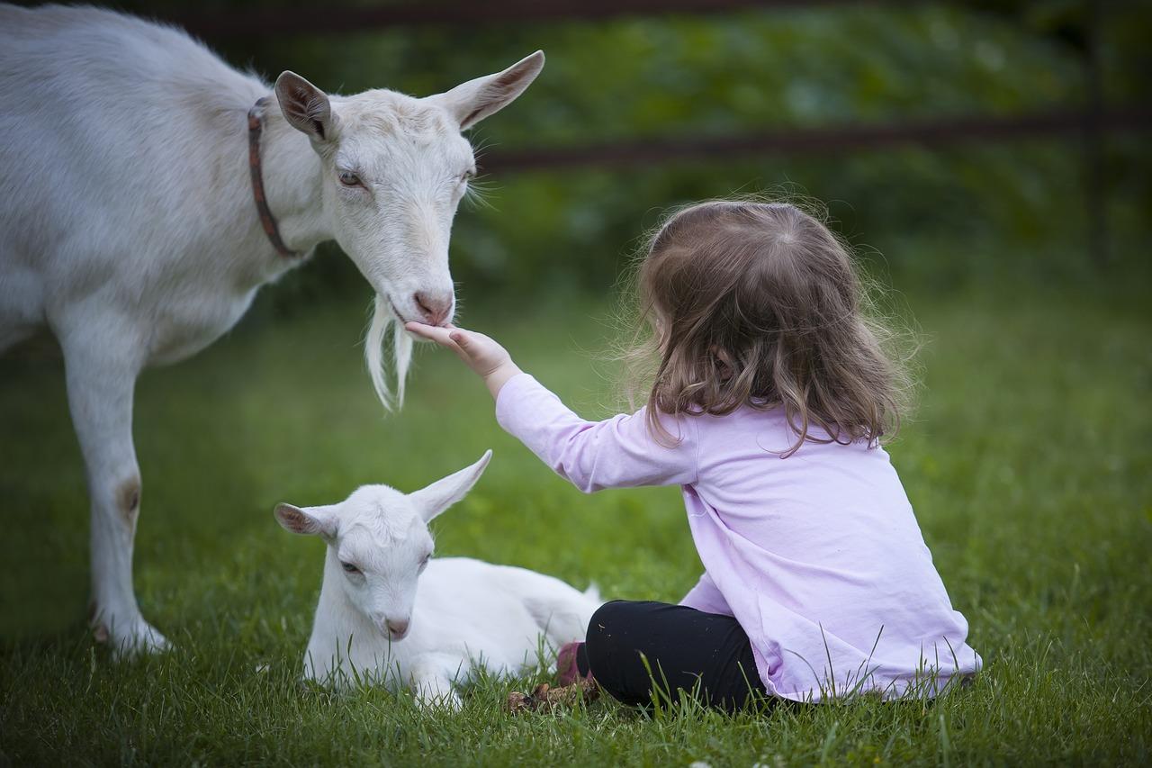 Animali-Amici-dei-Disabili-con-Autismo Animali amici dei disabili